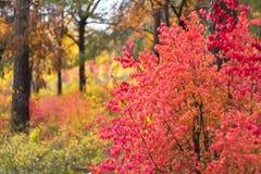 Το χρωματισμένο φύλλωμα στο δάσος φθινοπώρου στοκ εικόνα