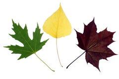 το χρώμα ανασκόπησης βγάζει φύλλα το λευκό Στοκ εικόνες με δικαίωμα ελεύθερης χρήσης