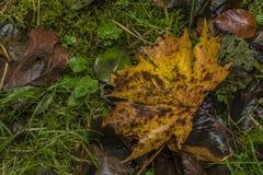 Το χρώμα βγάζει φύλλα στο πράσινο έδαφος στην ημέρα φθινοπώρου Στοκ Εικόνες