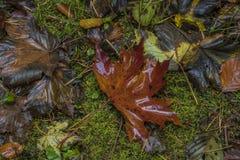 Το χρώμα βγάζει φύλλα στο πράσινο έδαφος στην ημέρα φθινοπώρου Στοκ φωτογραφία με δικαίωμα ελεύθερης χρήσης