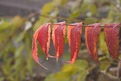 Το χρώμα του Νοεμβρίου στοκ εικόνα με δικαίωμα ελεύθερης χρήσης