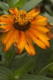 Το χρώμα του πορτοκαλιού Στοκ Εικόνες