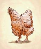 Το χρώμα χαράσσει την απομονωμένη απεικόνιση κοτόπουλου Στοκ Εικόνες
