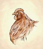 Το χρώμα χαράσσει την απομονωμένη απεικόνιση κοτόπουλου Στοκ εικόνες με δικαίωμα ελεύθερης χρήσης