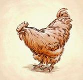 Το χρώμα χαράσσει την απομονωμένη απεικόνιση κοτόπουλου Στοκ Φωτογραφία