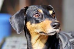 Το χτύπημα θέτει ενός σκυλιού Στοκ φωτογραφία με δικαίωμα ελεύθερης χρήσης