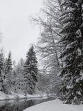 Το χωριό Roshchino στοκ εικόνα με δικαίωμα ελεύθερης χρήσης