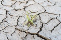 Το χώμα ράγισε από την ξηρασία και τον καψαλίζοντας ήλιο στοκ εικόνες