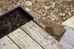 Το χώμα στο δοχείο για τη φύτευση Στοκ Εικόνες