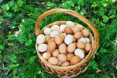 Το ψάθινο καλάθι με τα αυγά είναι στη χλόη στοκ εικόνα