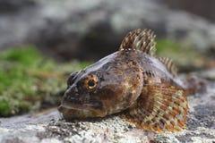 το ψάρι βρίσκεται στην πέτρα Στοκ φωτογραφία με δικαίωμα ελεύθερης χρήσης
