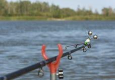 Το ψάρι ραμφίζει Στοκ Φωτογραφία