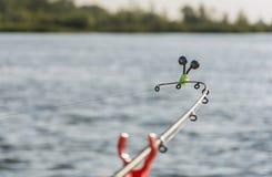 Το ψάρι ραμφίζει Στοκ Εικόνα