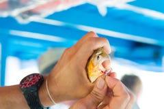 Το ψάρι στο γάντζο στο αρσενικό παραδίδει Santarem, Βραζιλία Στοκ Φωτογραφίες