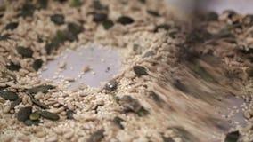 Το ψήσιμο σπόρου κολοκύθας, ηλίανθων και σουσαμιού στο καυτό τηγάνι, κλείνει επάνω  φιλμ μικρού μήκους