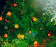 Το όμορφες λουλούδι και οι εγκαταστάσεις κήπων ΜΟΥ Στοκ φωτογραφία με δικαίωμα ελεύθερης χρήσης
