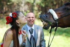 Το όμορφο άλογο πειράγματος νυφών, παρουσιάζει δόντια της Στοκ εικόνες με δικαίωμα ελεύθερης χρήσης