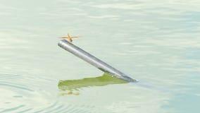 Το όμορφο έντομο λιβελλουλών που στηρίζεται στην πράσινη χλόη στη λίμνη τη θερινή ημέρα απόθεμα βίντεο