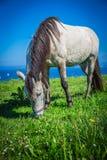 Το όμορφο ελαφρύ άλογο βόσκει στο λιβάδι μέχρι το φθινόπωρο Στοκ Εικόνες