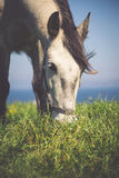 Το όμορφο ελαφρύ άλογο βόσκει στο λιβάδι μέχρι το φθινόπωρο Στοκ φωτογραφίες με δικαίωμα ελεύθερης χρήσης