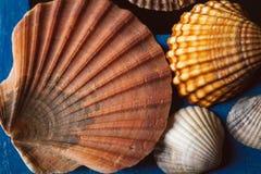 Το όμορφο θαλασσινό κοχύλι στο ξύλινο υπόβαθρο, κλείνει επάνω την άποψη της σύστασης και του υποβάθρου οστράκων για το σχέδιο Στοκ φωτογραφία με δικαίωμα ελεύθερης χρήσης