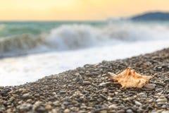 Το όμορφο θαλασσινό κοχύλι βρίσκεται σε μια παραλία χαλικιών σε ένα κλίμα του κύματος θάλασσας Στοκ φωτογραφία με δικαίωμα ελεύθερης χρήσης