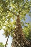 Το όμορφο διαφορετικό καπόκ καπόκ καπόκ ανήκει στο διαφορετικό δέντρο οικογενειακής ομορφιάς Στοκ φωτογραφία με δικαίωμα ελεύθερης χρήσης