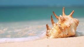 Το όμορφο κοχύλι στην άσπρη παραλία άμμου που πλένεται από ένα κύμα, κλείνει επάνω απόθεμα βίντεο