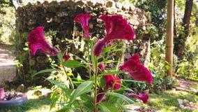 Το όμορφο κόκκινο λουλούδι στα ξύλα, κλείνει επάνω φιλμ μικρού μήκους