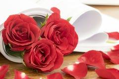 το όμορφο κόκκινο λουλ&omic Στοκ φωτογραφίες με δικαίωμα ελεύθερης χρήσης