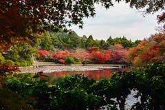 Το όμορφο κόκκινο φύλλωμα πτώσης που απεικονίζει σε μια λίμνη που πλαισιώνεται από τα φύλλα σφενδάμου, εστίαση είναι στο υπόβαθρο Στοκ φωτογραφία με δικαίωμα ελεύθερης χρήσης