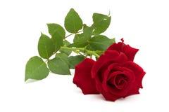 το όμορφο κόκκινο φύλλων &alph Στοκ εικόνα με δικαίωμα ελεύθερης χρήσης