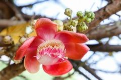 Το όμορφο λουλούδι και το πράσινο υπόβαθρο φύλλων στο λουλούδι καλλιεργούν στην ηλιόλουστη ημέρα καλοκαιριού ή άνοιξης λουλούδι γ Στοκ Φωτογραφία