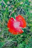 Το όμορφο μανιτάρι αυξάνεται στο δάσος νεράιδων φθινοπώρου στοκ εικόνα