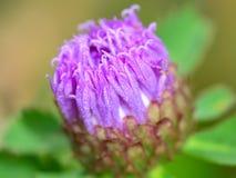 Το όμορφο μεγάλο λουλούδι Στοκ φωτογραφία με δικαίωμα ελεύθερης χρήσης