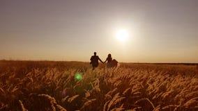 Το όμορφο νέο ζεύγος νυφών και νεόνυμφων τρέξιμο στον τομέα με το σίτο στη σκιαγραφία ηλιοβασιλέματος του φωτός του ήλιου φιλμ μικρού μήκους
