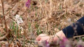 Το όμορφο νέο κορίτσι συλλέγει τα μπλε snowdrops στο δάσος φιλμ μικρού μήκους