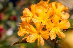Το όμορφο λουλούδι είναι στις ακτίνες του φωτός Στοκ εικόνα με δικαίωμα ελεύθερης χρήσης