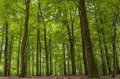 Το όμορφο πράσινο δάσος - δέντρα και βγάζει φύλλα Στοκ Εικόνες