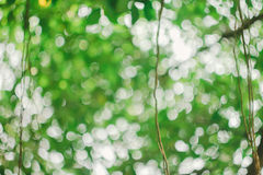 Το όμορφο πράσινο υπόβαθρο bokeh Στοκ εικόνα με δικαίωμα ελεύθερης χρήσης