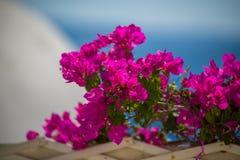Το όμορφο ροδαλό λουλούδι με ένα πράσινο υπόβαθρο θαμπάδων Στοκ Εικόνες
