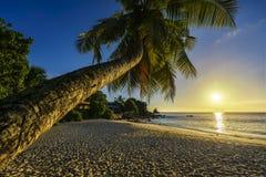 Το όμορφο ρομαντικό ηλιοβασίλεμα με έναν φοίνικα στον παράδεισο, Σεϋχέλλες είναι Στοκ Φωτογραφίες