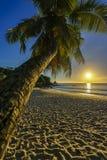 Το όμορφο ρομαντικό ηλιοβασίλεμα με έναν φοίνικα στον παράδεισο, Σεϋχέλλες είναι Στοκ Εικόνα