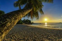 Το όμορφο ρομαντικό ηλιοβασίλεμα με έναν φοίνικα στον παράδεισο, Σεϋχέλλες είναι Στοκ φωτογραφία με δικαίωμα ελεύθερης χρήσης