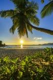Το όμορφο ρομαντικό ηλιοβασίλεμα με έναν φοίνικα στον παράδεισο, Σεϋχέλλες είναι Στοκ Εικόνες
