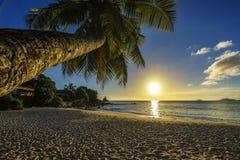 Το όμορφο ρομαντικό ηλιοβασίλεμα με έναν φοίνικα στον παράδεισο, Σεϋχέλλες είναι Στοκ Φωτογραφία
