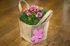 Το όμορφο ρόδινο λουλούδι kalanchoe με ευχαριστεί εσείς λαναρίζει Στοκ φωτογραφία με δικαίωμα ελεύθερης χρήσης