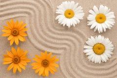 Το όμορφο τρέκλισμα της άμμου και των λουλουδιών, chamomile αυξάνεται στην άμμο Στοκ εικόνες με δικαίωμα ελεύθερης χρήσης
