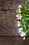 Το όμορφο υπόβαθρο άνοιξη με τη Apple ανθίζει το δέντρο Στοκ εικόνες με δικαίωμα ελεύθερης χρήσης