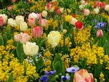 Το όμορφο υπόβαθρο κήπων με τις κόκκινες και άσπρες τουλίπες, μπλε anemones, στέφει τα αυτοκρατορικά λουλούδια στοκ φωτογραφίες